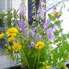 初夏の花々.jpg