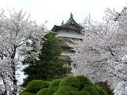 5天守閣桜と松.jpg