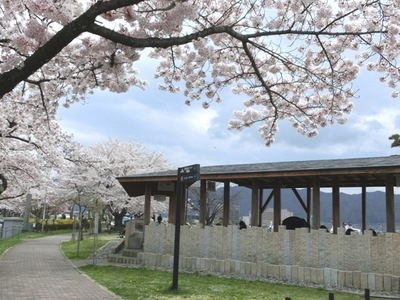足湯と桜3.jpg