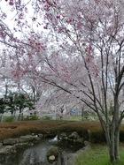クリーンレイク諏訪公園1.jpg